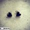 Fine små hjerte